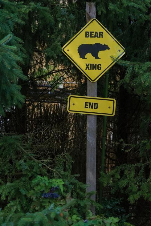"""קנדה: שילוט """"זהירות - דובים עוברים"""""""