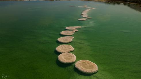 אלמוגי מלח בים המלח