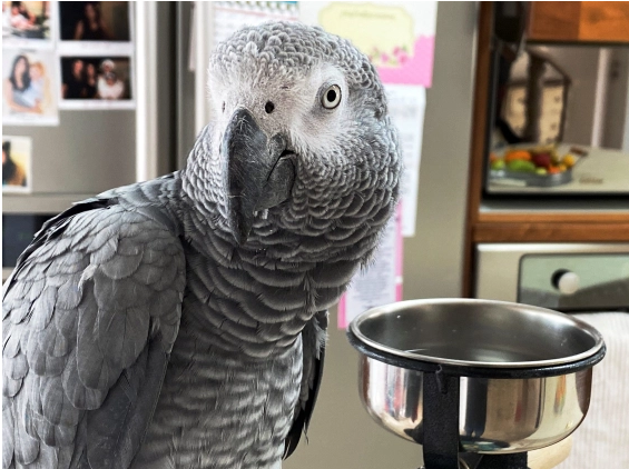 Luca the parrot