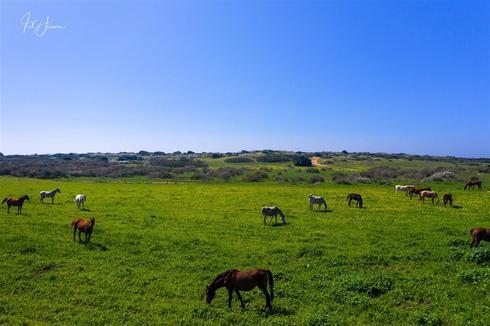 סוסים בשמורת תל גדור