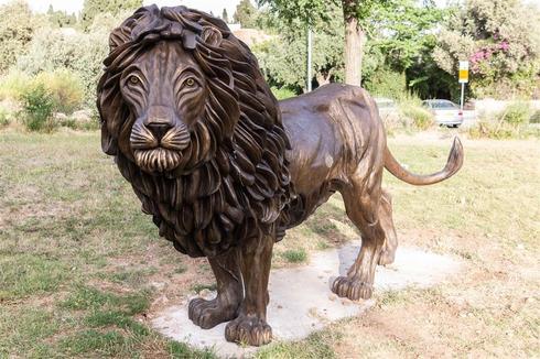 מלך השכונה בגן בלומפילד