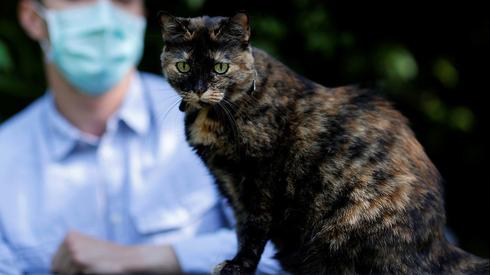 Feline good: French cat survives coronavirus infection