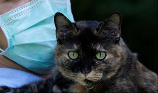 צרפת ה חתולה פאפי שרדה את נגיף ה קורונה