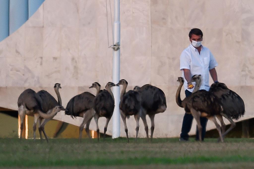 ז'איר בולסונרו ננשך ריאה עוף ארמון נשיא ברזיל