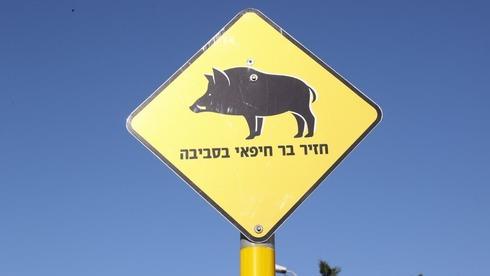 A warning sign in Haifa warning of boars in the area
