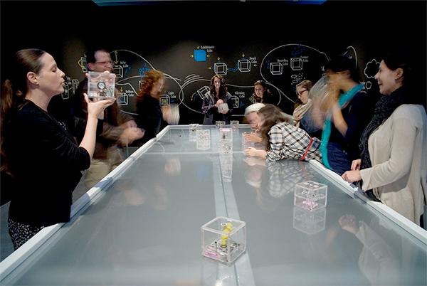פרויקט הקוביות של המעבדה לאינטראקציה - זכה להצלחה עולמית