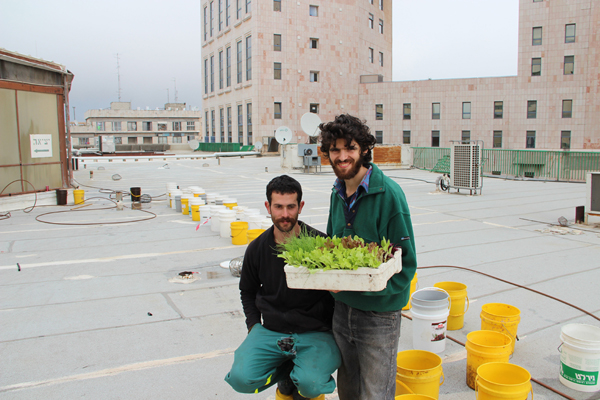 הקמת חווה אורבאנית במיכלים על גג המבנה. צילום: מאיר מיוחס