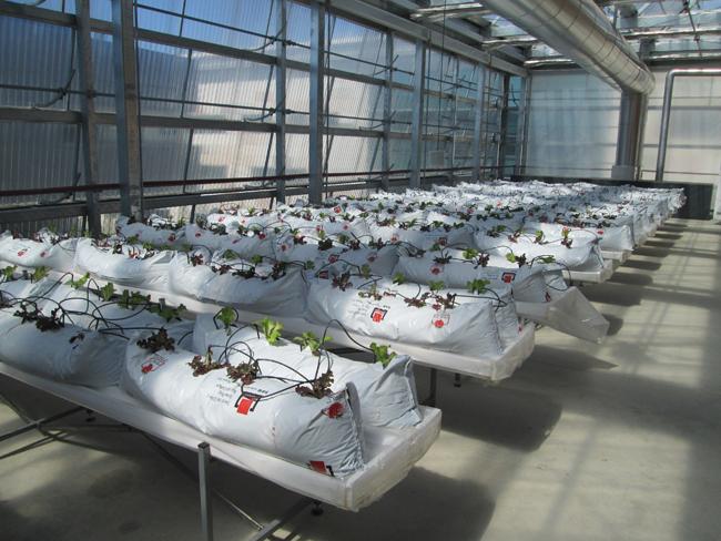 חקלאות עירונית על הגג. צילום: יעל גלעד
