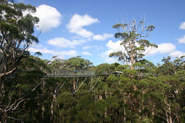 מקור ההשראה לעצי הענק: עמק הענקים באוסטרליה. באדיבות TIRIN