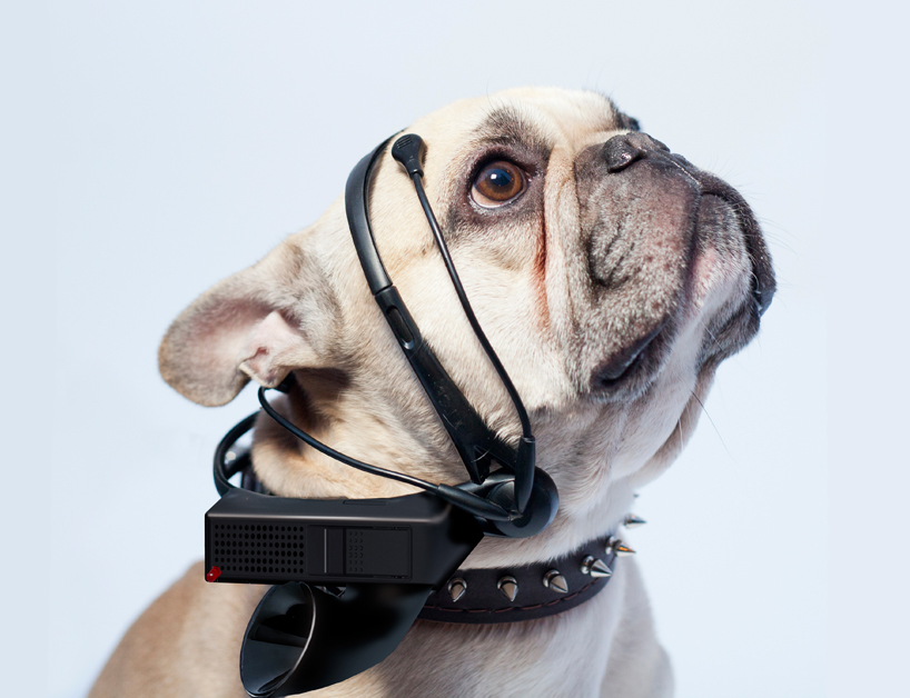 no-more-woof-translates-animal-thoughts-into-english-designboom-01
