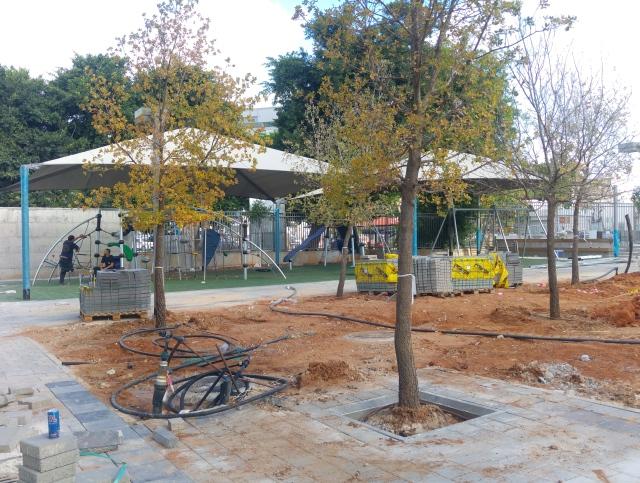 כמה מהעצים שנטעו בחצר בית הספר ופינת המשחקים שכבר הוקמה. רחוב הנגרים, 9 ביוני 2016