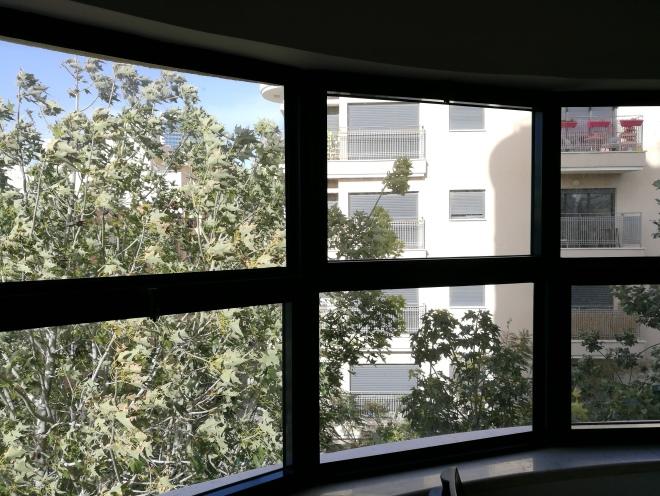 נוף ירוק בחלון הקומה השלישית. 14 בינואר 2018
