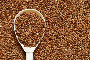 כוסמת. תחליף צמחוני לחלבון מהחי (צילום: shutterstock)