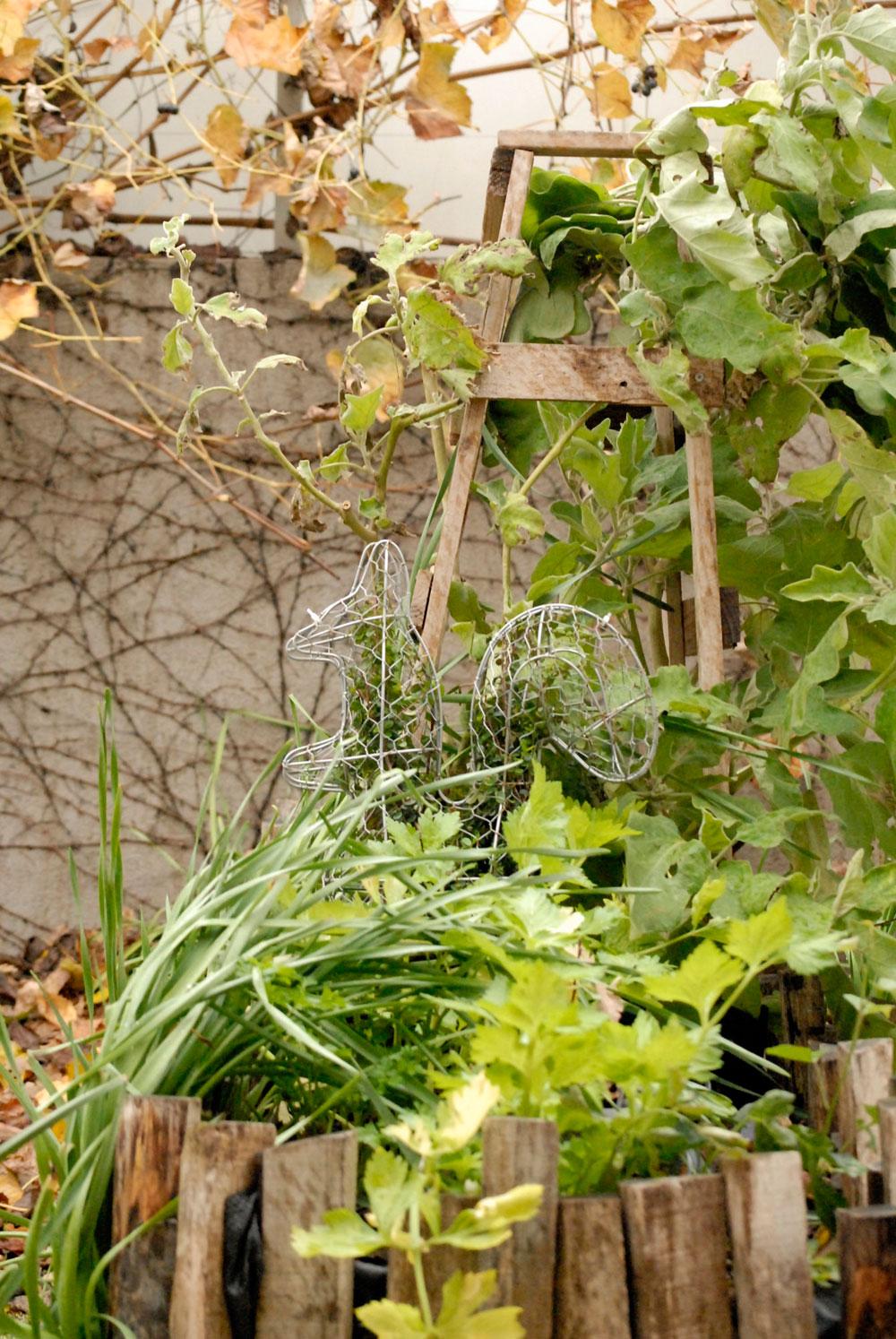 מסגרת סנאי מוכנה. הצמח גדל לתוך הצורה (צילום: שושן דגן )