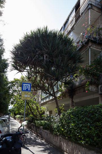 ירוק הולך ונעלם. גם בשדרות ח''ן כרתו (צילום: אביעד בר נס)