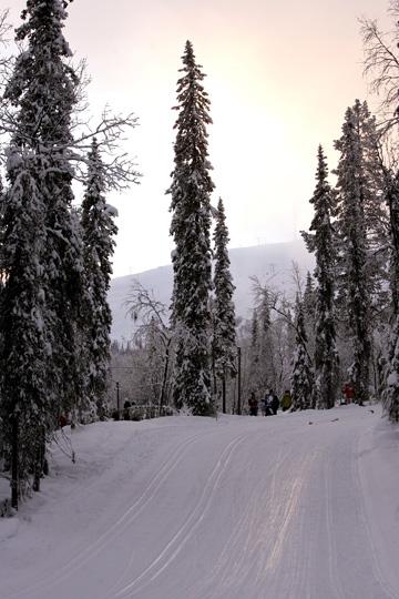 נוף סקנדינבי. עקב החורף הקשה והקור העז, הצרכים קודמים ליופי  (צילום: gettyimages)