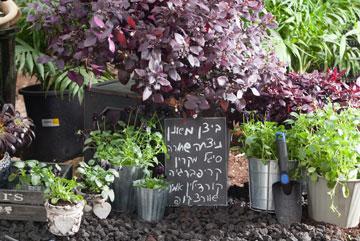בעזרת טכנולוגיה מתקדמת המאפשרת לבצע מניפולציות על הצמח (צילום: טל ניסים)