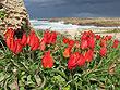 צילום: שרה גולד, צמח השדה