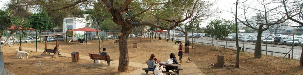 העקירה של העצים בגינת הכלבים של גינת דרויאנוב, השבוע. העירייה לחצה על משרד החקלאות לשנות את עמדתו (צילום: עילם טייכר)