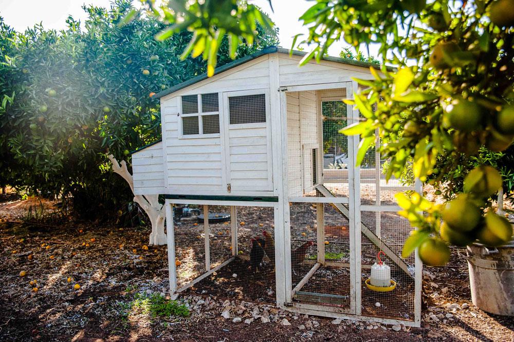 בגן גם נבנו מתקן למים אפורים ולול לתרנגולות חופש, שמספקות לבני הבית ביצים טריות (צילום: גלעד רדט)