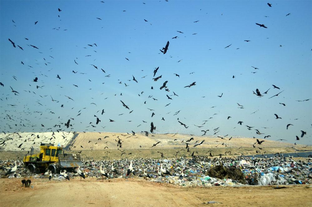 """פסולת בניין באתר דודאים שבנגב. ישראלי מייצר 1.9 ק""""ג אשפה מדי יום. הכמויות צומחות בעיקר בשל שימוש בכלים חד-פעמיים (צילום: כרמל חנני)"""