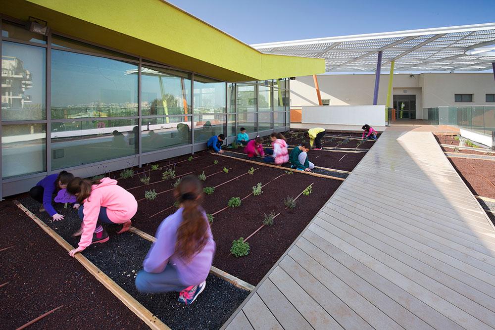 בית ספר בקריית ביאליק (תכנון: קנפו-כלימור אדריכלים, אדריכלות נוף: אב אדריכלות). הגג הירוק הוא חלק משטחי החוץ (צילום: עמית האס)