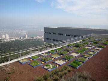 גינת ניסויים של מרכז המחקר בחיפה (באדיבות אוניברסיטת חיפה)
