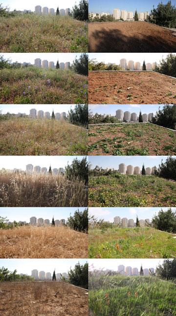 12 שלבים בהתפתחות הגג הירוק של התחנה לחקר ציפורי ירושלים (צילום: עמיר בלבן)