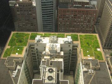 הגג הירוק של עיריית שיקגו. אצל השכנים הרבה יותר חם (צילום: TonyTheTiger, cc)