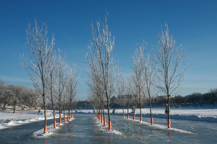 העצים המתים (כדי לא לעקור עצים חיים למען הפרויקט) נשתלו בתוך הקרח, ויישארו שם עד שהנהר יפשיר (צילום: CINDY HASLER )