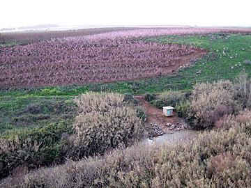 מטעים לאורך נחל שניר (צילום: אריאלה אפללו)