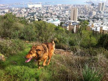 הנוף הוא הנכס של העיר (צילום : אמנון זמיר)
