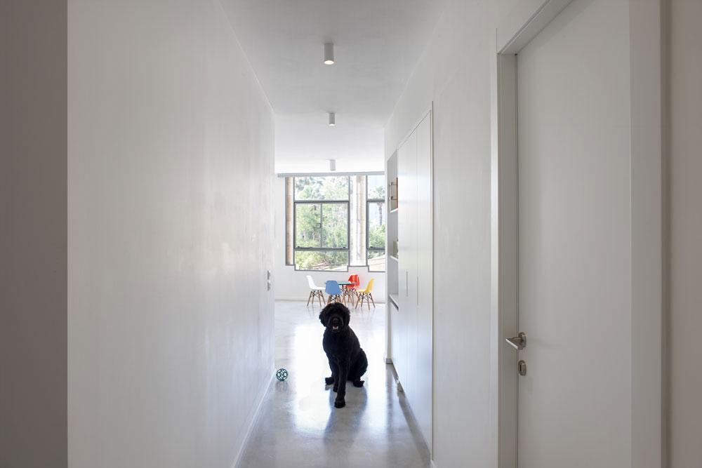 המסדרון שמוביל מדלת הכניסה לסלון (והכלבה המשפחתית). מימין חדר ההורים, משמאל חדרי הילדים. ארון גדול ושימושי נבנה במישור הקיר (צילום: עדי גלעד)