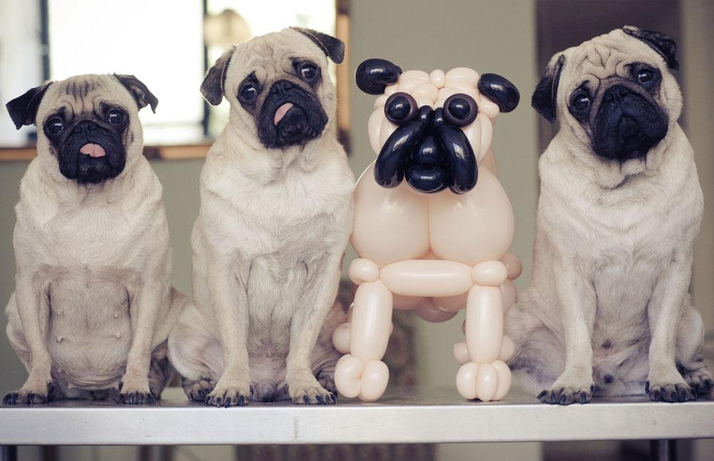 כלב מבלונים/ עיצוב: ברק דגן (צילום: אילן ספירא)