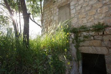 בית אבן, שהיה ביתה של משפחה ערבית עד 1948, מאכלס כעת בני שירות. אמור להשתפץ בשלב ב' של הפרויקט (צילום: דור נבו )