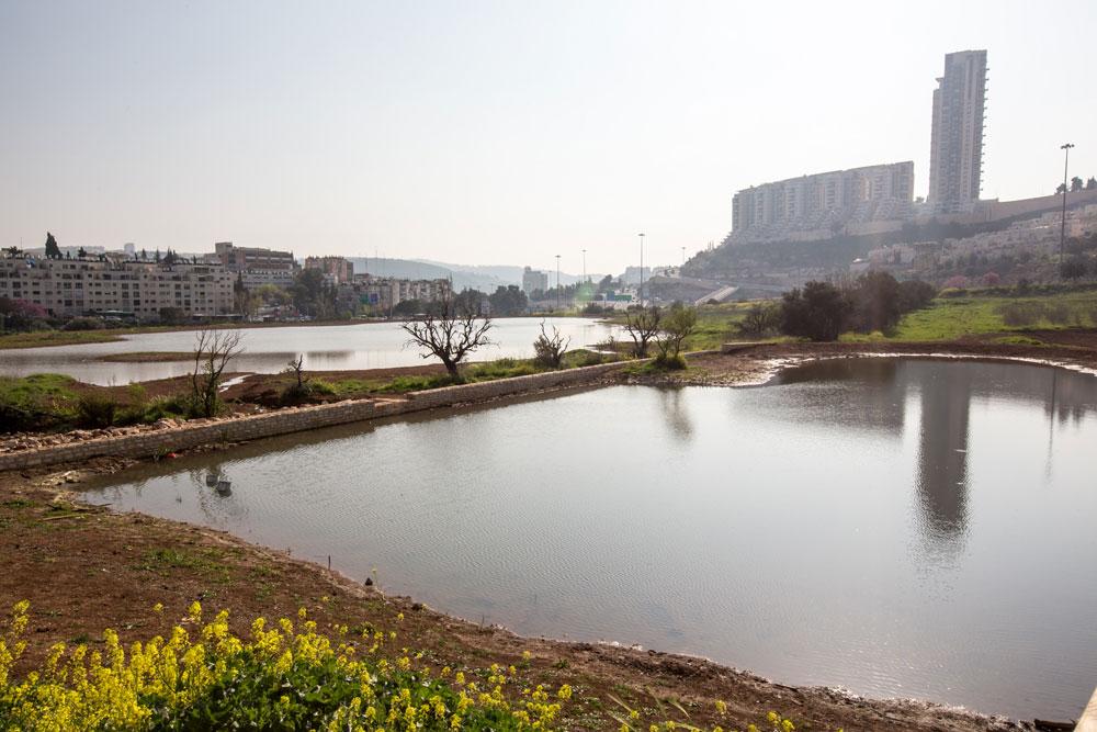 התשובה היפה לשחיתות של מגדלי הולילנד:  בריכות מים, שבילי הליכה, עצים, פרחים ורוגע על פני 180 דונם (צילום: דור נבו )