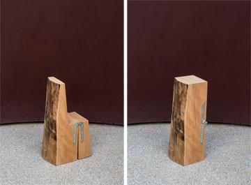 אותו גזע עץ, שני מצבים (צילום: איתי בנית)
