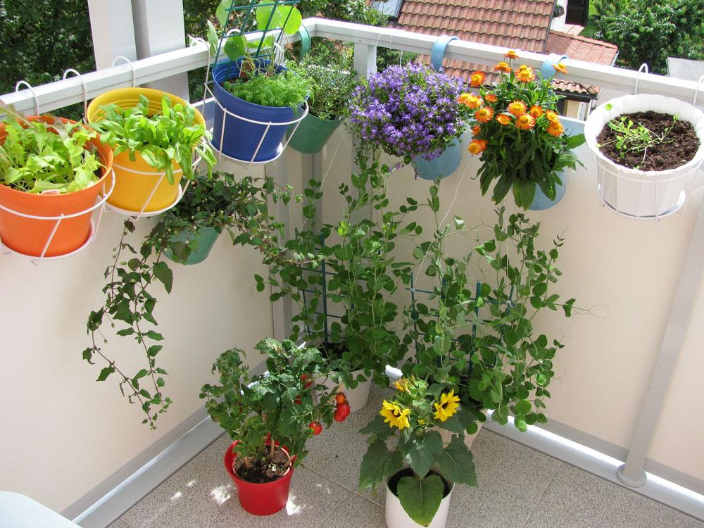 אקולוגי, חסכוני ותרפויטי. גינת ירק במרפסת  (צילום: shutterstock)
