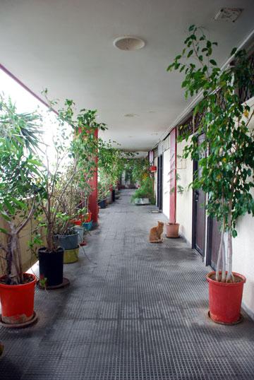 המסדרונות שמובילים לדירות מתפקדים כרחובות (צילום: יהב מרום)