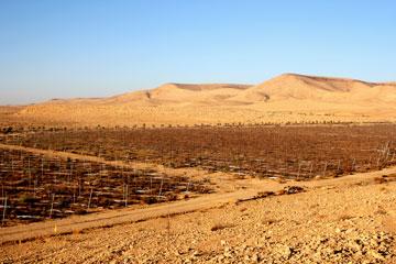 80 דונם של שטח חקלאי (צילום: טל זגרבה)