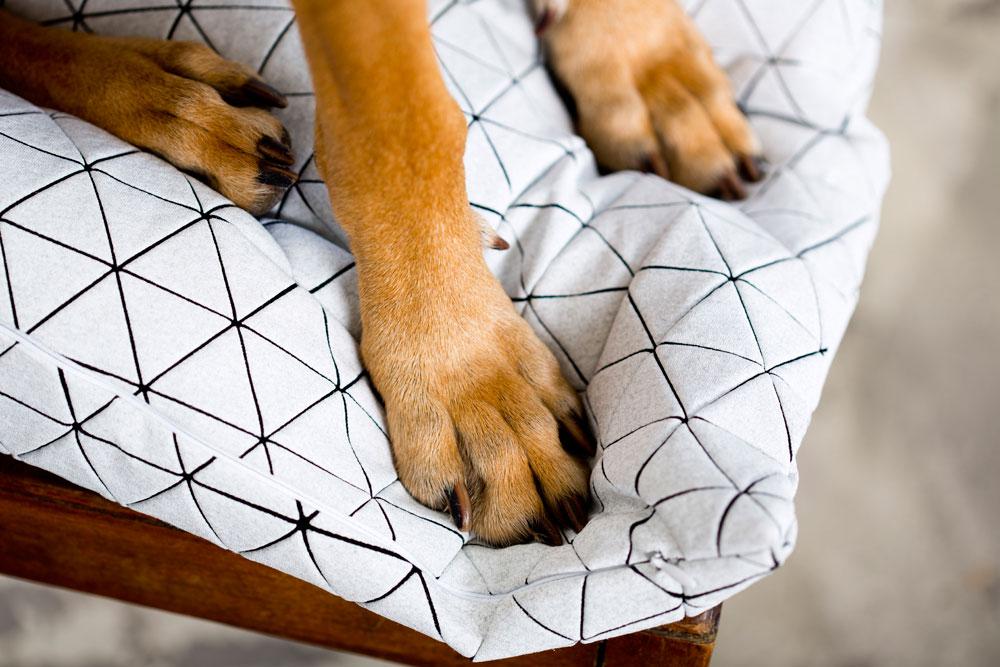 מיקה בר מעצבת ומייצרת בדים תלת-ממדיים שעשויים בטכניקות הדפסה ייחודיות, ושמהם נתפרים פריטים לבית, כמו כריות, מנורות וכורסאות (צילום: מיכאל טופיול)