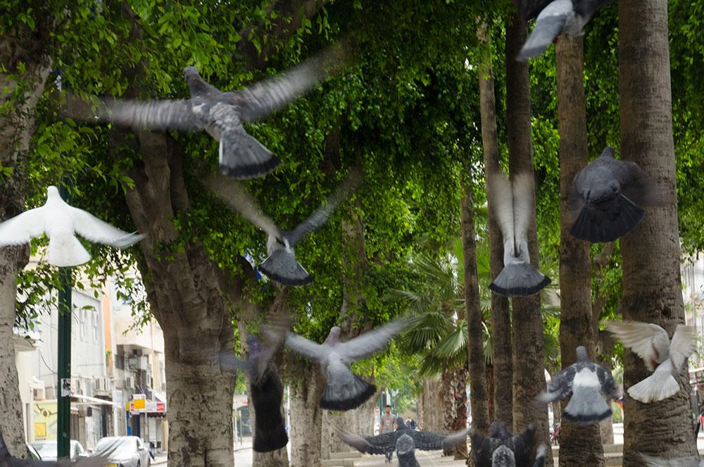 שדרות ירושלים ביפו יארחו הליכה אחרת בסוף השבוע. האזור משתנה באופן דרמטי בעשור האחרון, וזו הזדמנות להכיר אותו לעומק (צילום: ורד נבון)