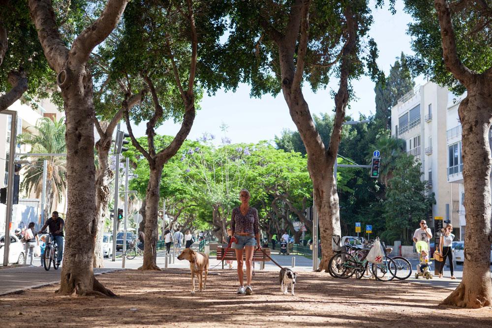 סוד ההצלחה של תל אביב הוא לא בתי באוהאוס, אלא מודל ''עיר הגנים'' של גדס. לא רק שדרות רוטשילד (בתצלום) אלא בתים מוקפים בעצים ובגינות (צילום: דור נבו)