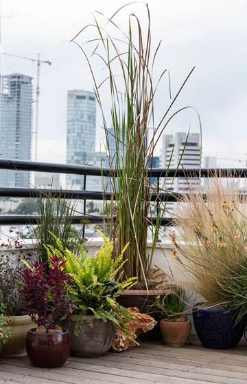 את הפינות הירוקות במרפסות תיכנן אדריכל הנוף ליאב שלם (צילום: איתי בנית)