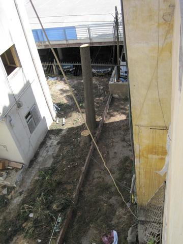 כאן היו עצים ותיקים. רחוב טיומקין 12 (צילום: אלון בן טוב)
