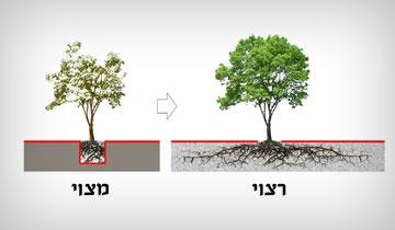 העץ שהופך לקישוט (תרשים:  אדריכל שחר צור)