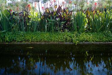 הבריכה אקולוגית ובגינה יש מעין ערוגה שאוספת מי גשמים, שמשמשים להשקיה (צילום: מיקאלה בורסטאו)