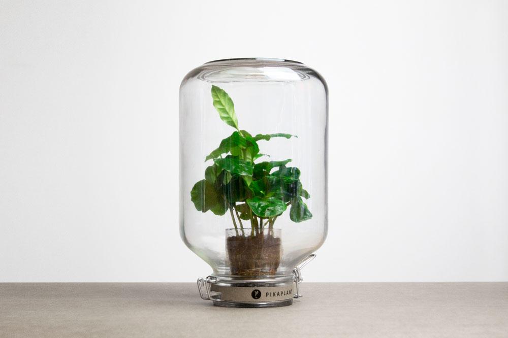 העציץ הזה לא צריך מים. הצמח סגור בתוך צנצנת הפוכה, והאדים שנודפים מהצמח נשארים כלואים בפנים - ומשקים את הצמח בחזרה. פטנט של Pikaplant ההולנדים, להשיג באתר האינטרנט שלהם (צילום: Pikaplant)