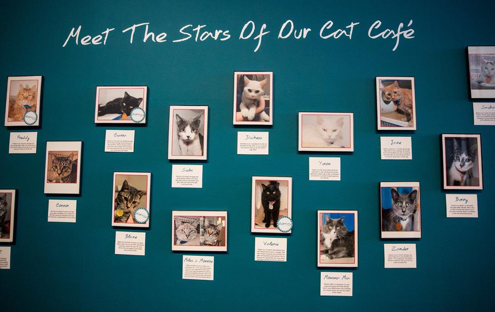 שותים קפה ומתלבטים את מי לאמץ. בית קפה זמני למען אימוץ חתולים (צילום: gettyimages)