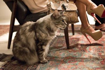 בין דיירי הבית: שלוש חתולות. אחת מהן נצמדה לעקבי הענק של פנינה טורנה (צילום: סיוון אלירזי)